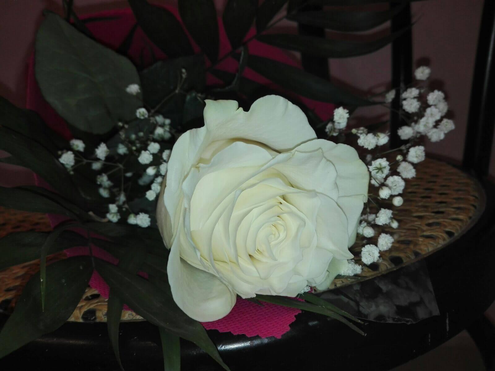 La rosa del agracedimiento a lencería Bodi Chic,
